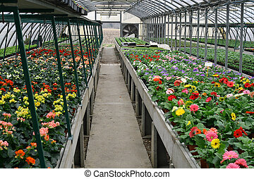 내부, 의, a, 보호되고 있다, 온실, 치고는, 성장하는, 꽃과 식물