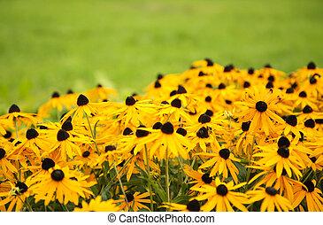 노란 꽃, 통하고 있는, 그만큼, 녹색의 배경