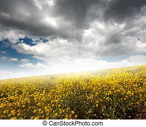 노란 들판