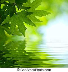 녹색은 떠난다, 반영하는, 물에서, 얕은 초점