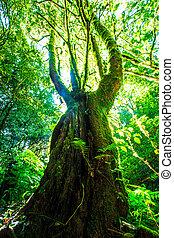 녹색의 숲, sunlight., 자연, 크게, 나무