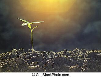 녹색의 식물, 성장하는, 와, sunlight., 자연, 배경