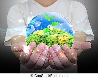 녹색의 식물, 에서, a, 손