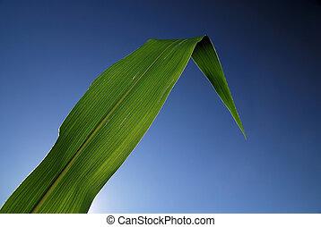 녹색의 잎, 와, 푸른 하늘, 에서, 배경