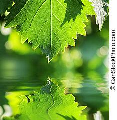녹색의 잎, 위의, 물