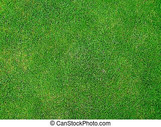 녹색, 녹색 잔디
