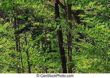 녹색, 봄, 숲