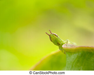 녹색, 스타일, 메뚜기, 와, 녹색
