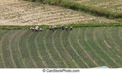 농업, 남아메리카