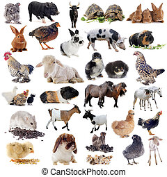 농장 동물