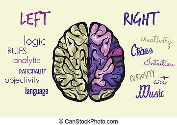 뇌, 기능