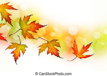 눈이 듯한, 가을의 잎