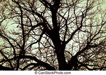 늙은, 오크 나무