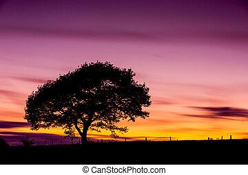늙은, 오크 나무, 통하고 있는, 일몰, 에, 그만큼, eifel