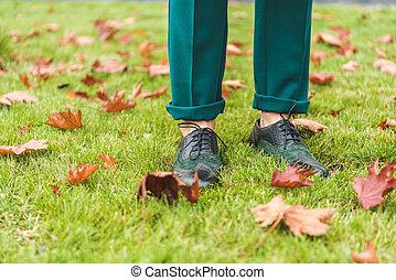 다리, 통하고 있는, 잔디, 와, 가을의 잎