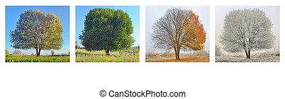 다만 ...만, 뿐, 나무, 에서, 4, 계절