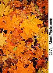 다채로운, 가을의 잎, 배경