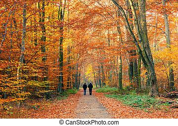 다채로운, 가을, 공원