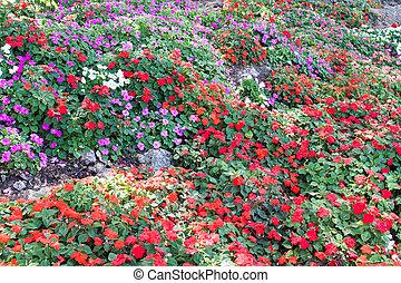 다채로운, 피튜니아, 꽃