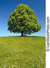 단일, 나무, 에, 봄