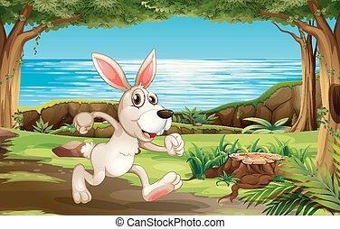 달리기, 공원, 토끼