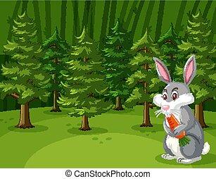 당근, 숲, 토끼, 장면, 먹다, 크게