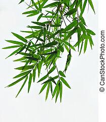 대나무, 잎