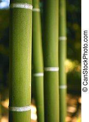대나무, 지팡이, 녹색 재배지