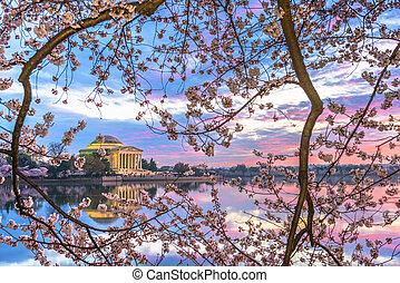 대야, dc, 조수의, 제퍼슨 기념탑, 워싱톤