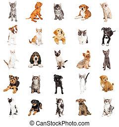 대 모임, 의, 강아지, 와..., 새끼고양이