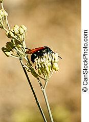 독거미의 일종 매, 클로즈업