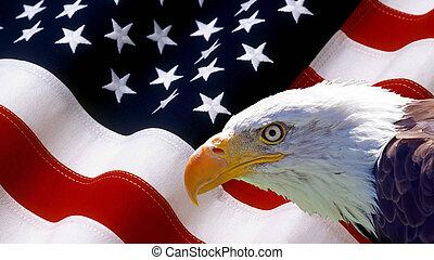 독수리, 기, 드러내다, 노스 아메리칸
