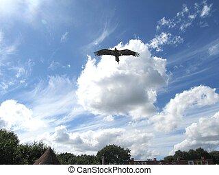 독수리, 비행중에