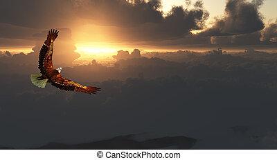 독수리, 비행중에, 이상, 극적인, cloudscape