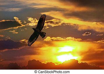 독수리, 하늘, 일몰