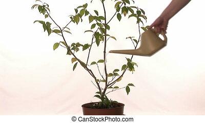 돈, 성장하는, 통하고 있는, a, 나무