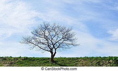 들판, 그리고 푸른색, 하늘