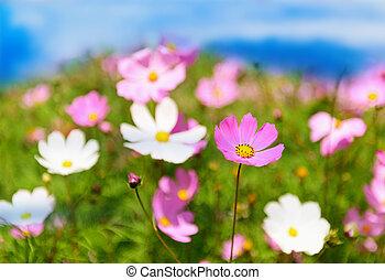 들판, 꽃, 여름