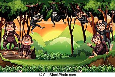 등반 나무, 정글, 원숭이