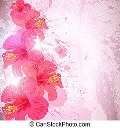 떼어내다, 열대적인, 배경., 하이비스커스, 꽃, 치고는, design.