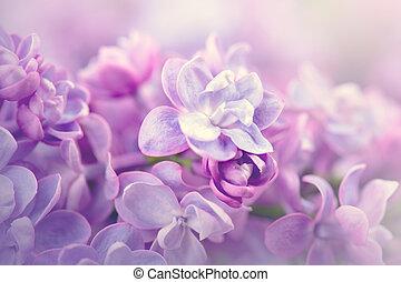 라일락, 꽃, 다발, 제비꽃, 예술, 디자인, 배경