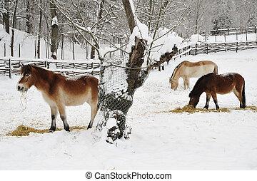 말, 에서, 겨울