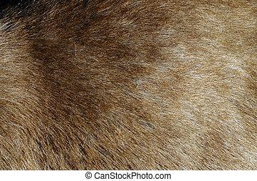 머리, 끝내다, 사슴, 위로의