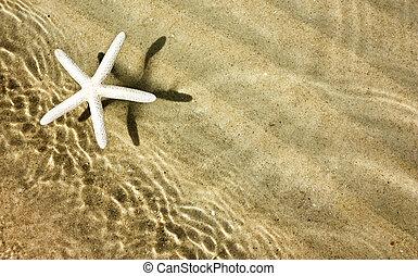 명란한, 바닷가, 불가사리, 여름