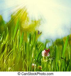 명란한, 여름의 날, 통하고 있는, 그만큼, 목초지, 떼어내다, 제자리표, 배경