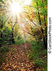 명란한, 잎, 가을