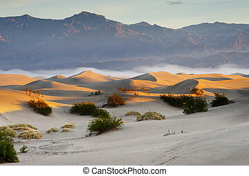 모래, 사막