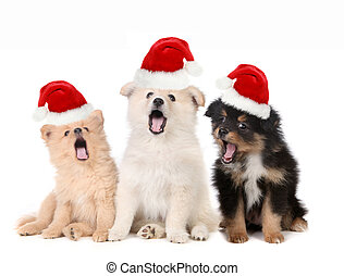 모자를 쓰는 것, santa, 강아지, 노래하는, 크리스마스