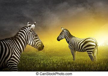 목초지, 2, zebra
