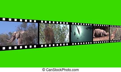 몽타주, 의, 야생 생물